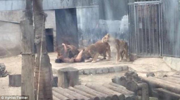 男子闯入狮笼自杀 饲养员为救人杀两兽 - 双梅 - 张静华