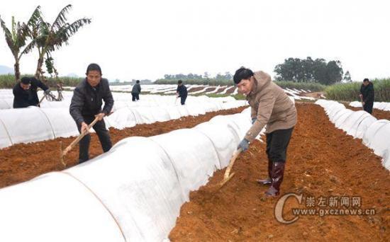 图为1月23日,该县干部职工与龙头乡肖汉村下片屯群众一起冒着寒冬细雨