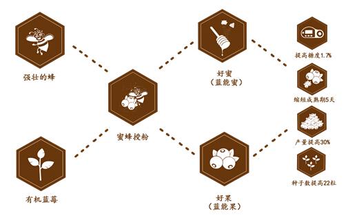 图:好蜂好果=蓝莓种植+蜜蜂授粉 顾益康和林华荣在发展模式上达成了共识,双方都认为,应该将蜂莓大地打造成为集蜜蜂授粉、蓝莓种植、生物医药、农业电商、涉农服务、科技文化于一体的蜂莓全产业链科技型现代化农业综合体。如此一来,2016年企业将实现销售收入2000万元,利税500万元,服务种植蓝莓3000亩,带动农民增收超过5000万元,可谓是一举多得。